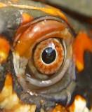 Turtle Eye.jpg