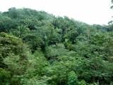 Roatan Rain Forest