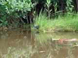 Bird in Belize