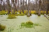 The Cyprus Swamp Garden