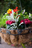 Hanging basket on the porch