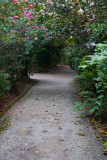 One of the many pathways