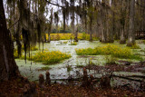 Cypress Swamp Garden on the road out