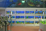 My kind of Home Center....they sell tropical fish!