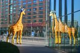 Giraffe at Potsdamer Platz