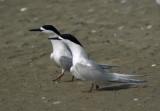 nz_endemic_water_birds