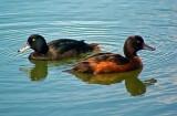 Wetland & Seabirds of New Zealand.