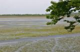 Laguna Limon-Nisibon 5.jpg