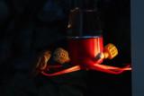 Hummingbird feeder light