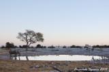 Okaukuejo waterhole after sunset