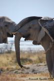 Elephant's embrace