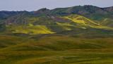 California Spring Central California, April 2008