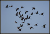 Crane group flying