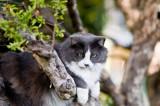 Mitsie in the tree