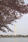 DC Cherry 2010