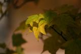 leaves1.