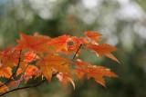 leaves2.