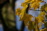 leaves3.
