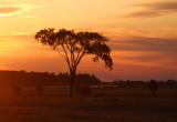 Grassland Sunrise 8402