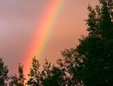 Rainbow & Aspen 8206