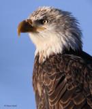 ~Eagles