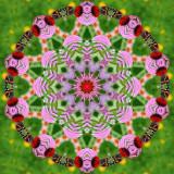 Butterfly 5.jpg