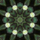 Lupin Drop 3.jpg