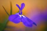 Flowers, close ups