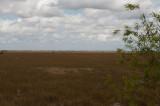 Everglades - General Views