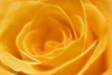 orangey