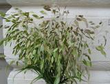109 grasses.jpg