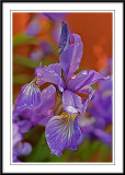 photoshop smudge iris