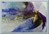 iris ice