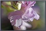 wild flower smudged in Photoshop