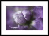 Soft purple...