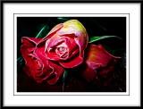 three roses...