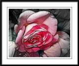 only a rose...