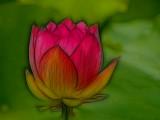 Lotus blossom...