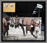 Donkey-Taxi-Mijas.jpg