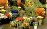 flower mkt 2.jpg