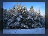 snow scene.jpg