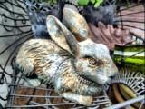 bunny-hdr.jpg