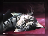 Palms-kitten.jpg