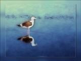 seagull-1.jpg