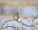 S.E. Owl