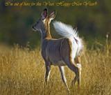 White Tait Deer( Doe)