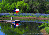 Texas and Bluebonnets