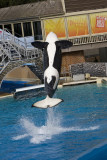 Sea World_118.jpg