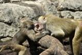 baboons of Brooklyn_01.jpg