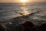 Sunrise at Jupiter FL_09.jpg